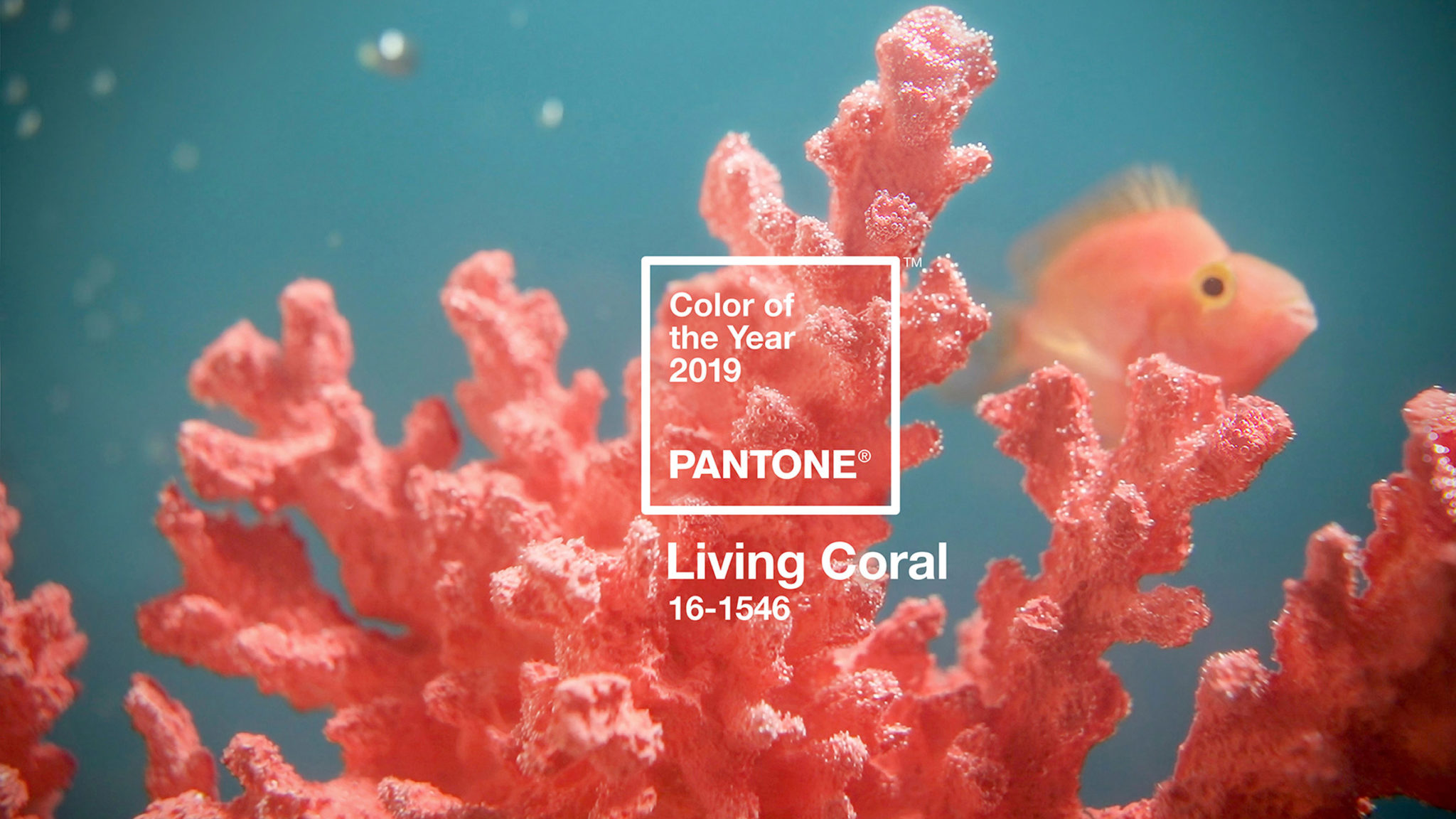 The official 2019 colour is not just about a charming and warm pink. Pantone official describes the colour as warm and welcoming, but versatile and life-affirming. As per every year, the election of the Pantone colour affects in a direct way to art & design, flooding from street fashion and haute couture, to interior design and decoration. This year´s Pantone its surprisingly the colour of the underwater reefs hanging on for dear life and the sky at dusk. A bright and powerful colour that has a great importance in the natural world. Where the natural resources as the coral are in serious danger of disappearing. But this neon bright saturated tone is also a great reflection of the current society, full of social media leaks and with a high digital impact. An artificial universe where the tone has a big presence too. Living Coral is a beautiful and vibrant colour that shows such opposing ideas and realities. Choosing it as 2019 colour of the year, Pantone continues with the overwhelming trend of distinguishing a high saturated tone with multiple meanings. The commencing 2019 will be a colour explosion coming right after the 2018 Ultraviolet and 2016 Greenery tones.