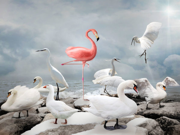 PICTOCLUB Photographs - PINK FLAMINGO - Pictoclub Originals