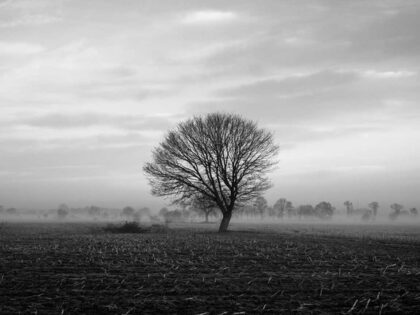 PICTOCLUB Photographs - MISTY TREE - Pictoclub Originals