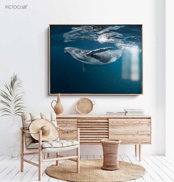 PICTOCLUB Photographs - OCEAN WHALE - Pictoclub Originals